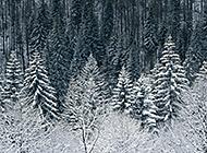 冬季高山雪景白色唯美景观
