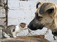 小动物搞笑图片之友爱之吻