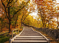 秋天枫树林唯美意境图片