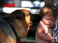狗狗爆笑图片之我要亲亲你