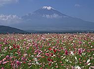 美妙绝伦的富士山下风光高清壁纸