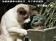 猫咪等着翻页爆笑图片