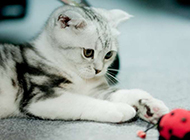 卖萌的猫星人高清动物图片