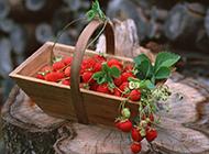 超诱人红彤彤的草莓让你垂涎欲滴