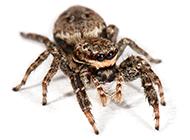 宠物蜘蛛微距高清图片