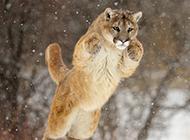 有趣的动物高清图片欣赏