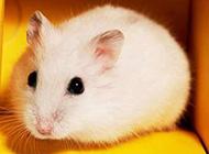 仓鼠的小幸福唯美意境图片