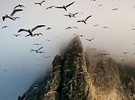 大自然中自由自在的动物摄影图片