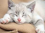 猫咪宠物睡觉可爱呆萌图集