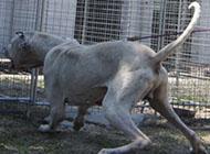 库达犬凶猛对峙图片