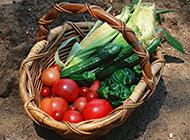 新鲜绿色健康蔬菜高清图片拍摄