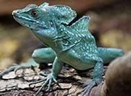 冷血动物蜥蜴高清特写图片