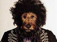 超霸气的宠物摇滚大腕明星