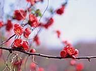 生机勃勃的春天美景图片