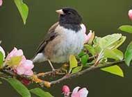 娇小玲珑的小鸟高清图片