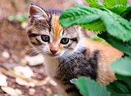 各种可爱的小动物高清图片