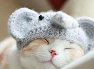 呆萌小猫咪可爱唯美写真