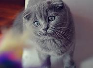 可爱猫咪图片壁纸精选素材