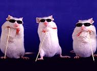 小白鼠搞笑创意写真图片