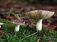 森林中美丽的野蘑菇高清摄影图片