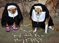 狗狗变身修女搞笑图