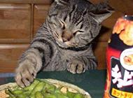 猫咪搞怪表情之偷吃