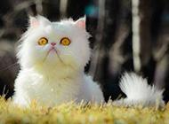 萌态十足的猫咪高清晰图片