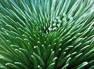 绿色植物树叶高清图片