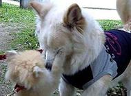 动物搞笑内涵图之狗哥不要哭