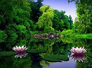 美丽荷花公园夏天风景图片
