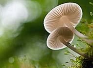大自然里的蘑菇高清图片合集
