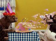 搞笑猫咪图片之祝你生日快乐