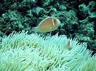 海底森林特写海底环境