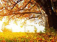 秋天落叶唯美风景宽屏桌面壁纸