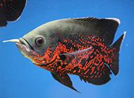 小地图鱼进食图片