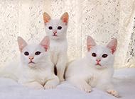 精选可爱的小猫高清桌面壁纸