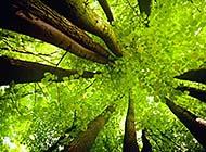 树林唯美自然风光桌面壁纸