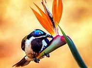 自然界五彩的小鸟梦幻自然美景图
