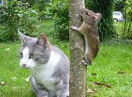 动物爆笑趣图之躲猫猫