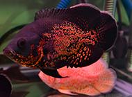 精品地图鱼姿态优雅图片