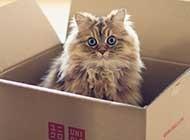 超萌宠物小猫高清图片