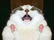 恶搞猫咪图片之你要吓死朕了