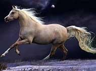 飞驰向前的骏马桌面高清壁纸
