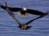 雷人搞笑图片之鸟儿版泰坦尼克号