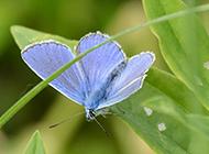 植物昆虫唯美意境图片壁纸