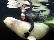 昔日冠军回归自然 俄美女冰下全裸戏白鲸