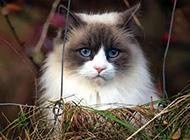 可爱猫咪卖萌图集欣赏