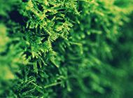 春天风景唯美图片绿色明媚