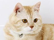 可爱肉嘟嘟的小猫咪图片