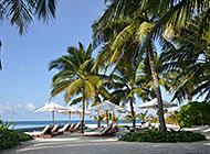 旅游胜地之马尔代夫椰林高清壁纸